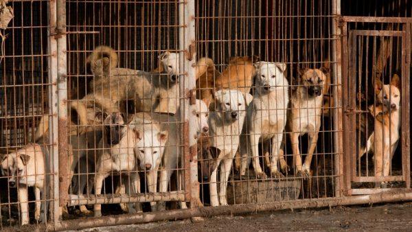 Animais não são mercadoria!