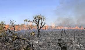 Há duas semanas, florestas e matas estão sendo queimadas no Acre, Rondônia, Mato Grosso e Mato Grosso do Sul, incluindo áreas de preservação ambiental.